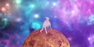 PERRO BAILANDO Shooting Stars meme